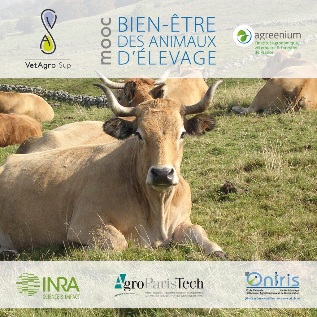 Mooc: Le bien-être des animaux d'élevage