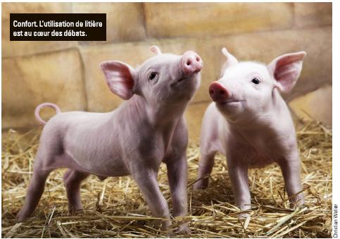 La France Agricole – Les initiatives en faveur du bien-être animal se multiplient.