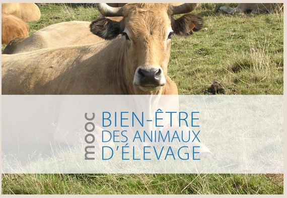 VetAgro Sup – Première session du Mooc sur le «bien-être des animaux d'élevage» : bilan très positif !