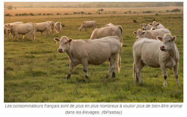 Web agri – Le bien-être animal, une réalité ignorée par les consommateurs