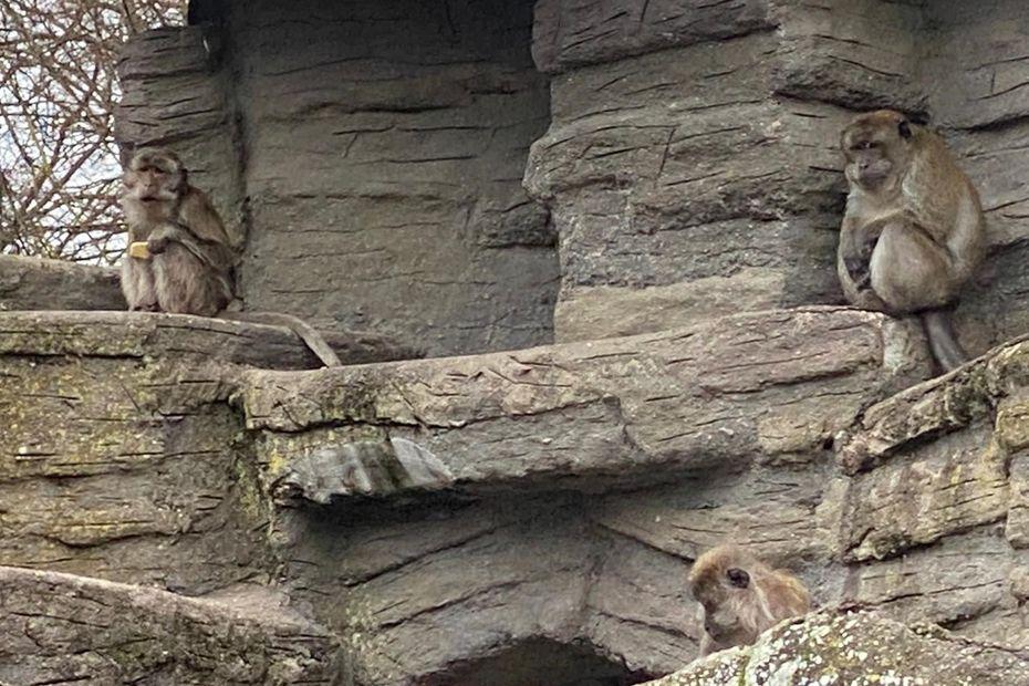 Franceinfo – Nancy : plus d'animaux non domestiques au zoo de la Pépinière, la fin d'une époque