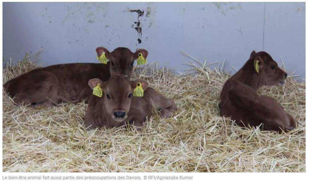 RFI – Le bien-être animal : un nouvel enjeu de société ?