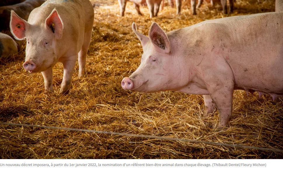 Les Echos – L'agroalimentaire s'attaque au défi du bien-être animal